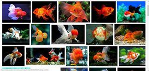 Cá nước ngọt tiếng Anh nói thế nào nhỉ?